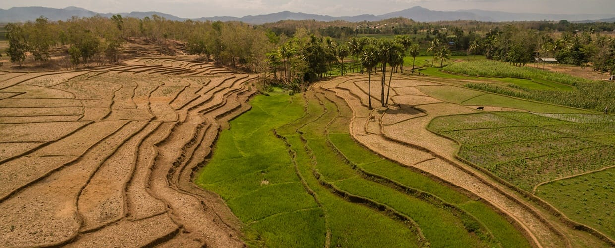 Timor-Leste: Countryside, Field, Grassland, Nature, Outdoors, Paddy Field, Land