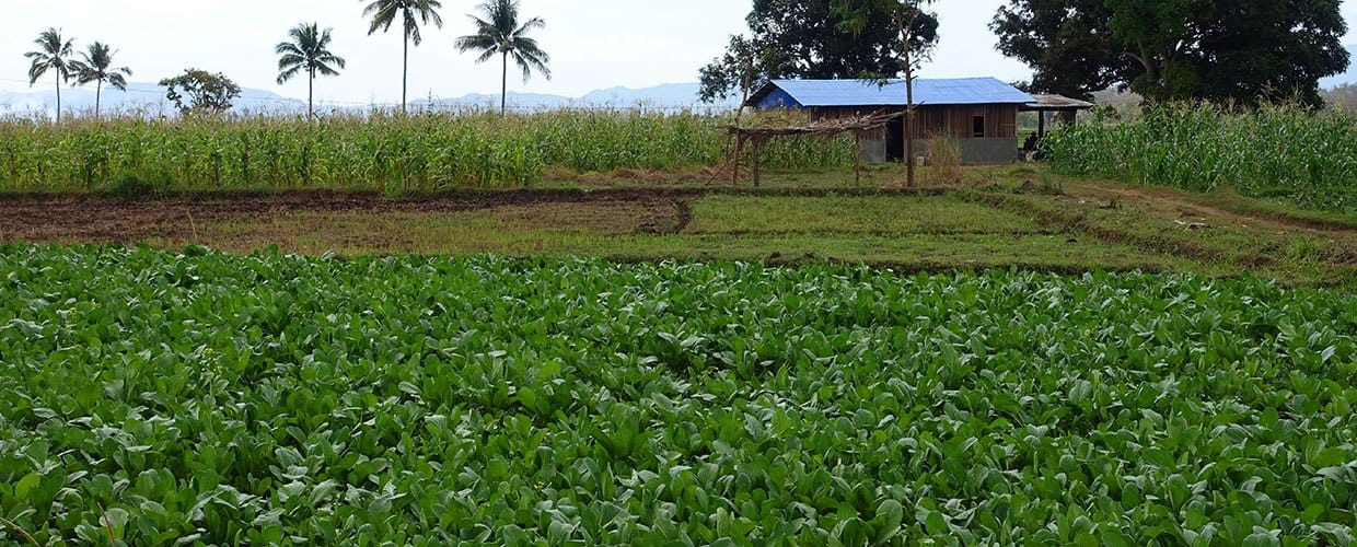 Timor-Leste: Field, Flora, Grass, Plant, Countryside, Nature, Outdoors, Soil