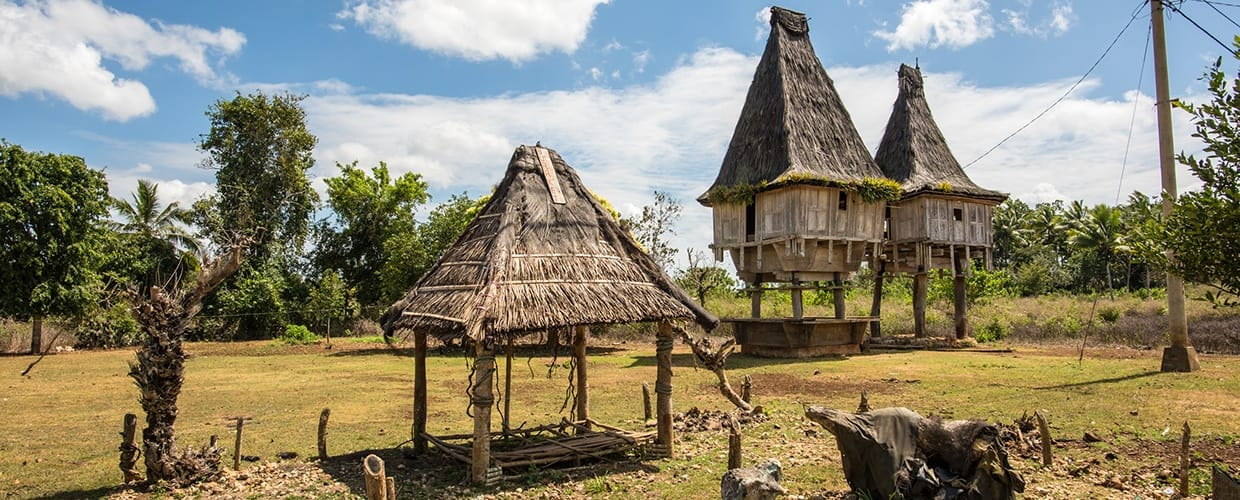Timor-Leste: Building, Countryside, Hut, Nature, Outdoors, Rural, Shack, Shelter, Flora, Plant, Tree, Conifer, Yew, Vegetation, Cottage, House, Housing, Oak, Sycamore, Forest, Grove, Land, Ruins, Pine, Park, Abies, Fir