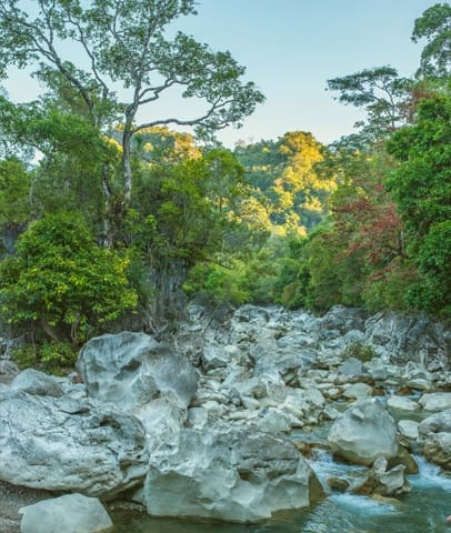 Timor-Leste: Creek, Outdoors, Stream, Water, Rock, Flora, Forest, Land, Nature, Plant, Rainforest, Tree, Vegetation, Cliff, River, Waterfall, Jungle
